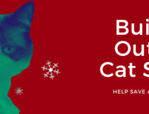 Save a Life this Winter: Build an Outdoor Cat Shelter